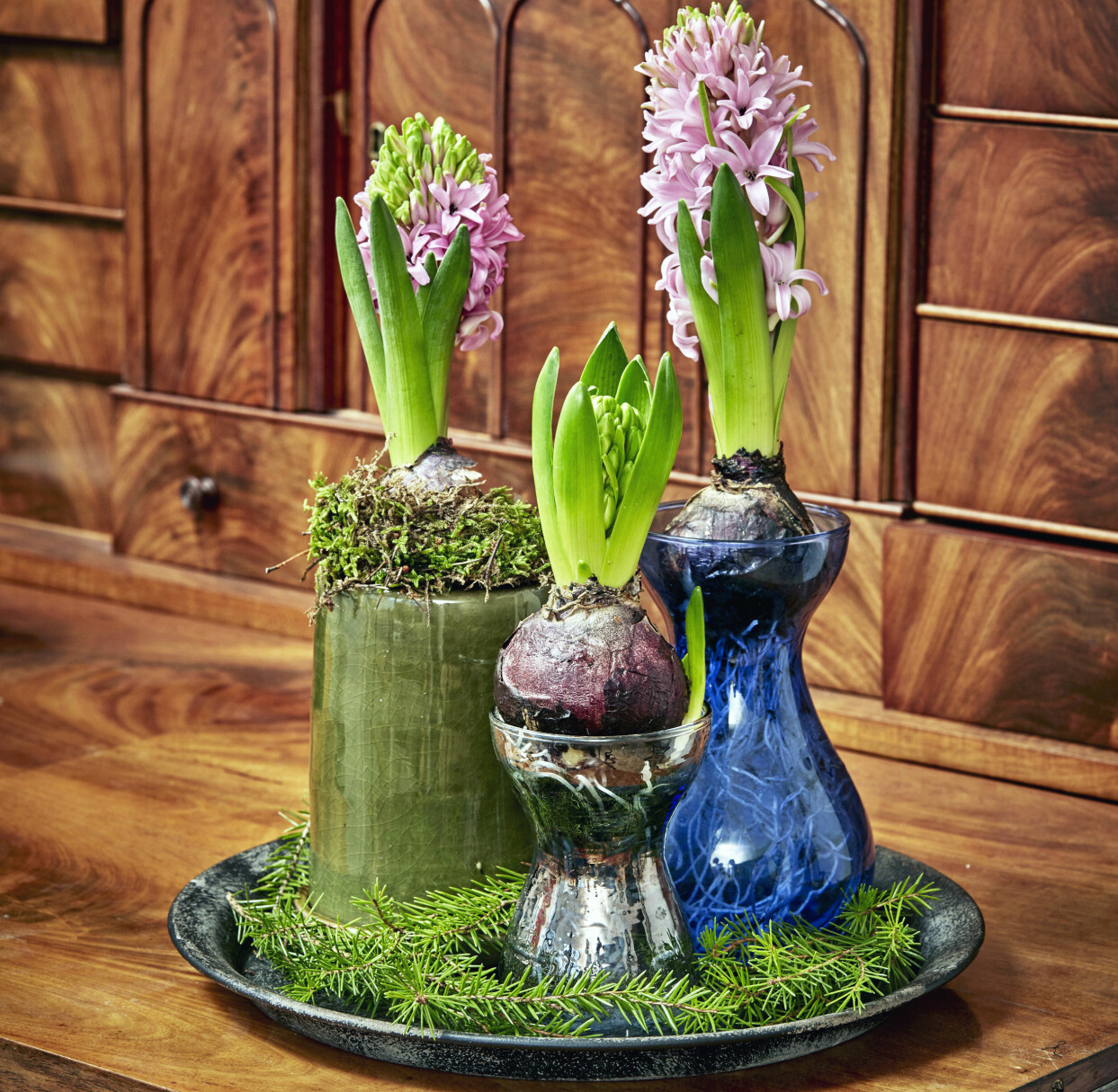 Hyacinter i hyacintglas och krukor på bricka.