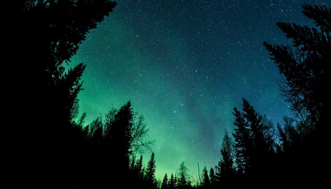 Vackert norrsken syns på himlen ovanför en skog.