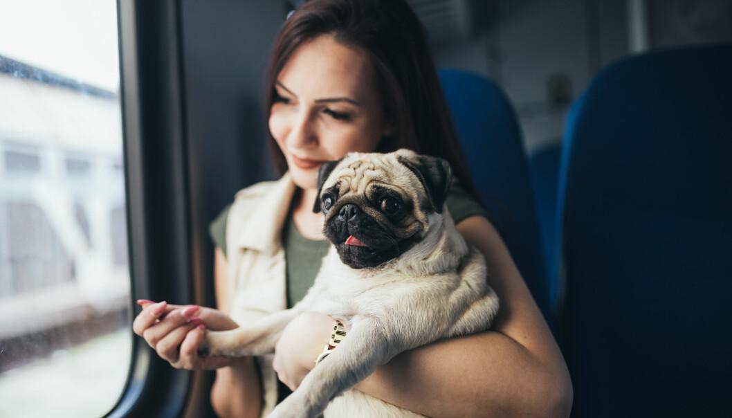 Kvinna åker tåg med sin hund i famnen.