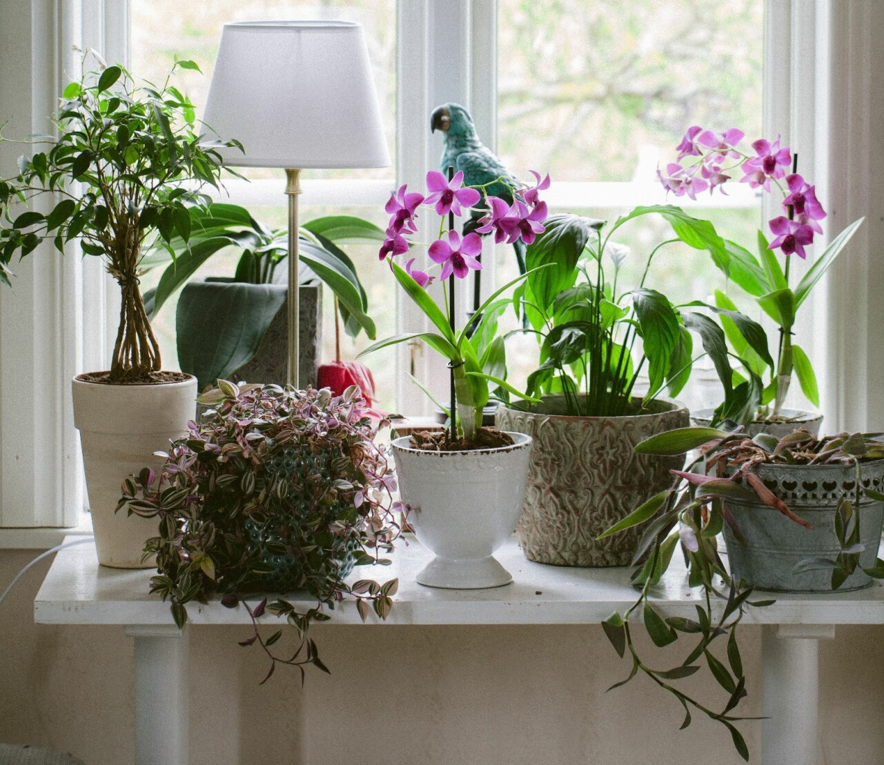 Orkidéer och olika typer av växter i ett fönster.