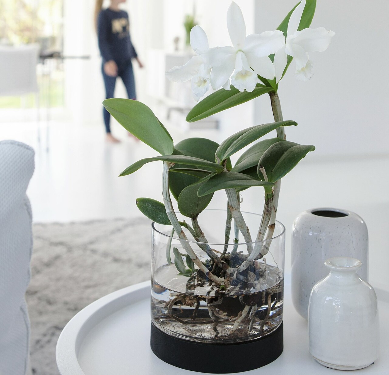 Vit orkidé med rötterna fria i vatten.