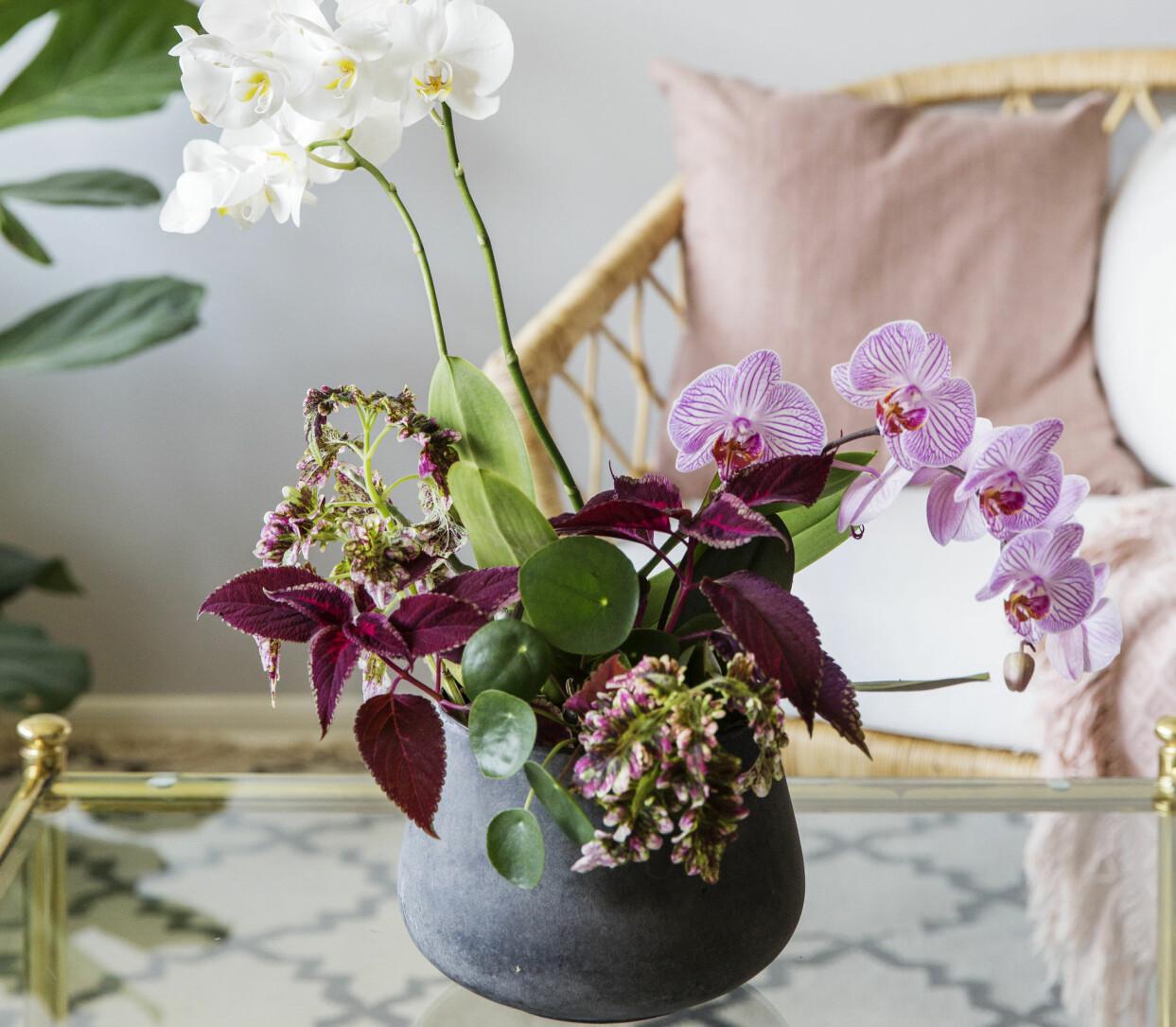 Orkidé samplanterad med elefantöra och palettblad.