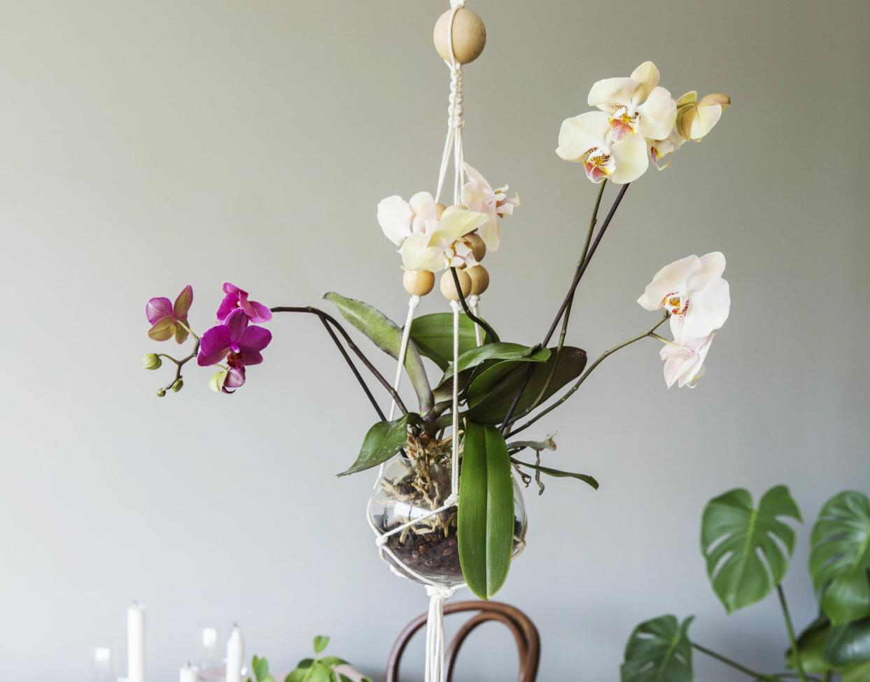Arrangemang av orkidéer som svävar i luften.