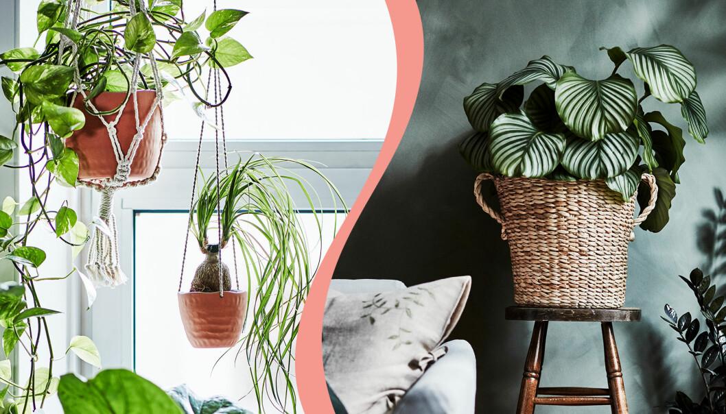 Kollage med bilder från Ikeas nya kollektion Botanisk.