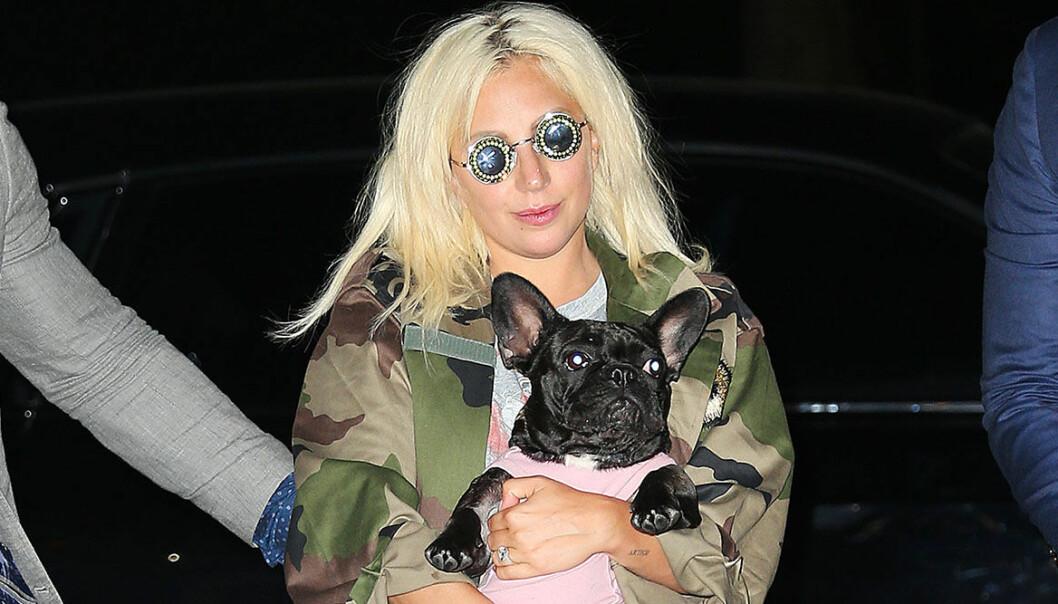 Lady Gaga med hunden Asia