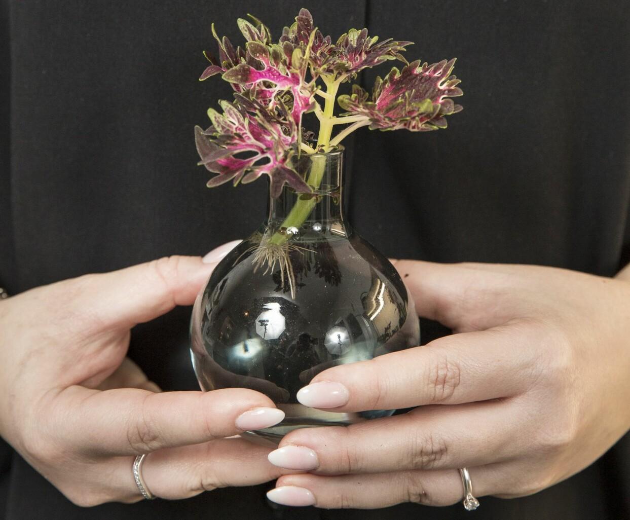 Kvinna håller upp en liten vas med palettblad i vatten.