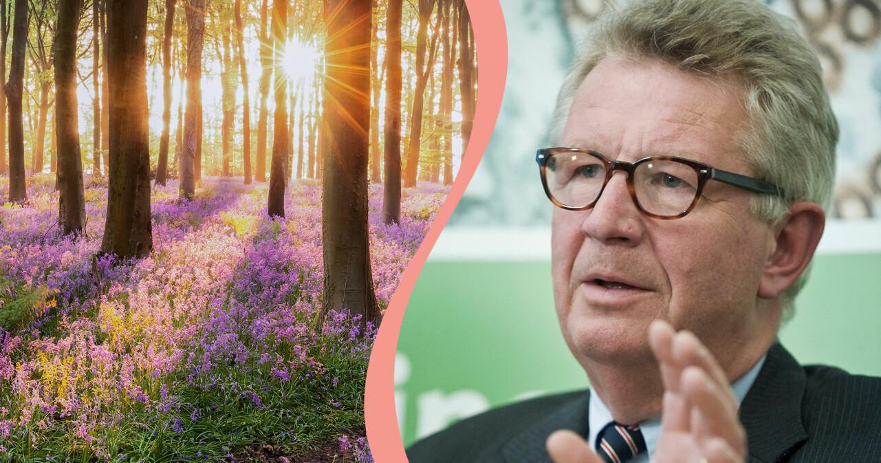 Kollage av skog med solljus och experten Johan Giesecke.