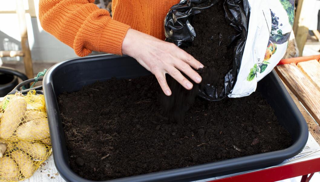 Här används vanlig planteringsjord till att förodla potatis.