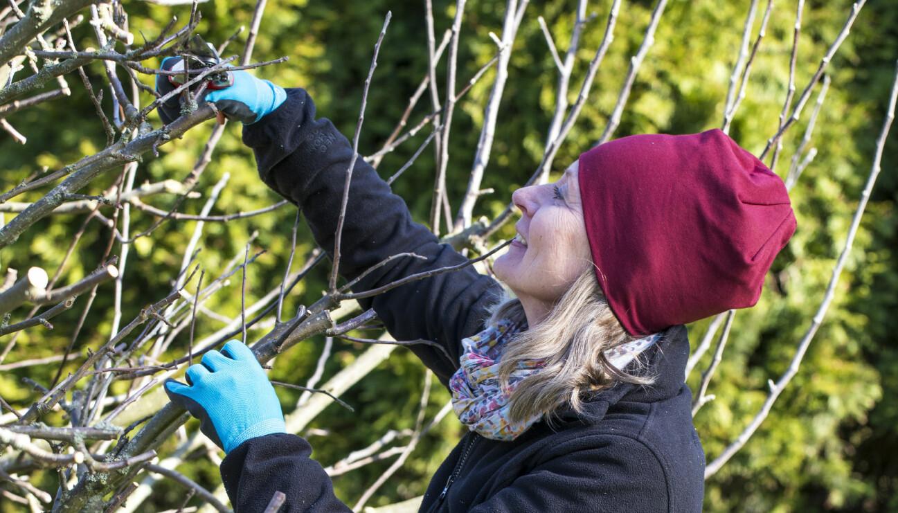 Trädgårdsexperten Anni Jähde visar hur du beskär äppelträd.