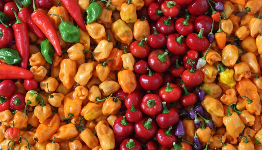 Paprika och chili går alldeles utmärkt att odla på balkong.