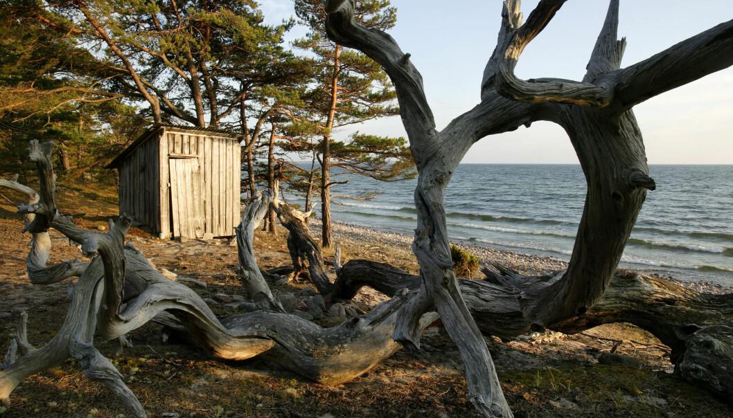 Trollskogen på Öland.