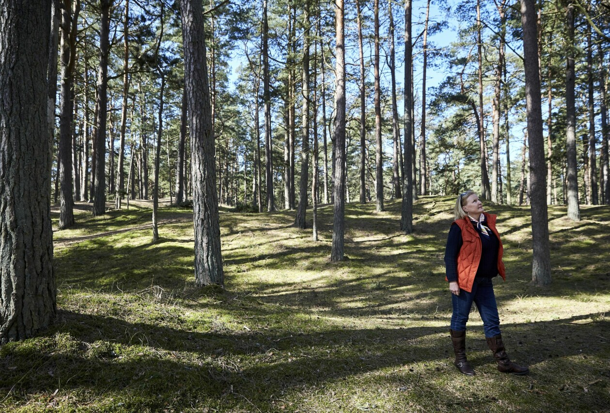 Aryel vandrar i skogen.