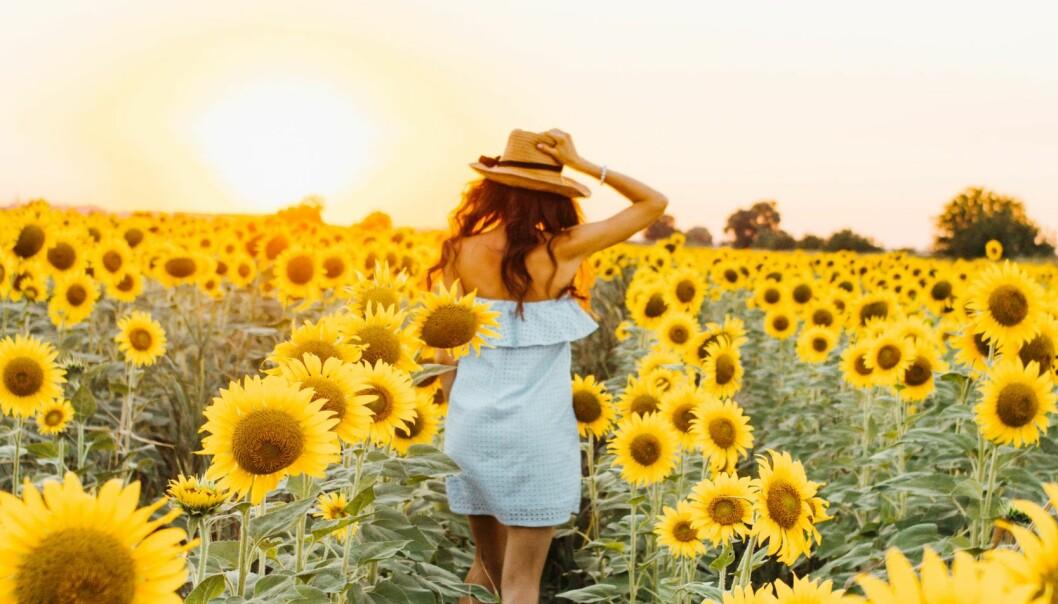 Kvinna bland solrosor