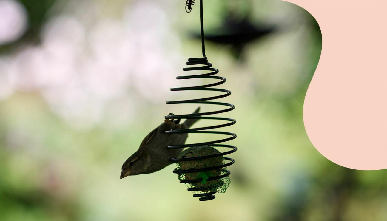 Småfågel som äter mat från en talgboll i en trädgård.