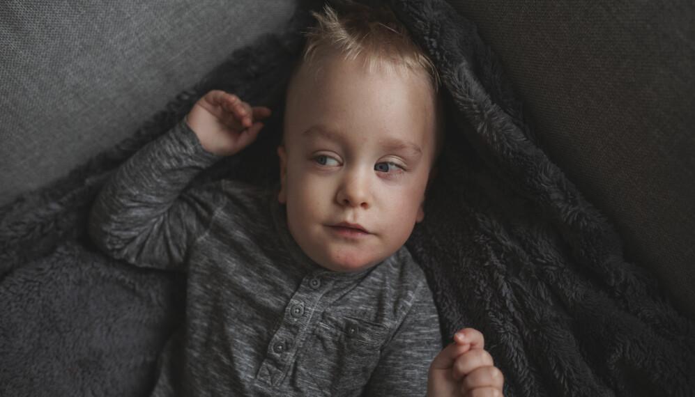 Närbild på Elton som ligger i en grå soffa på en grå mjuk filt. Han har blåa ögon, blont hår, och tittar åt sidan.