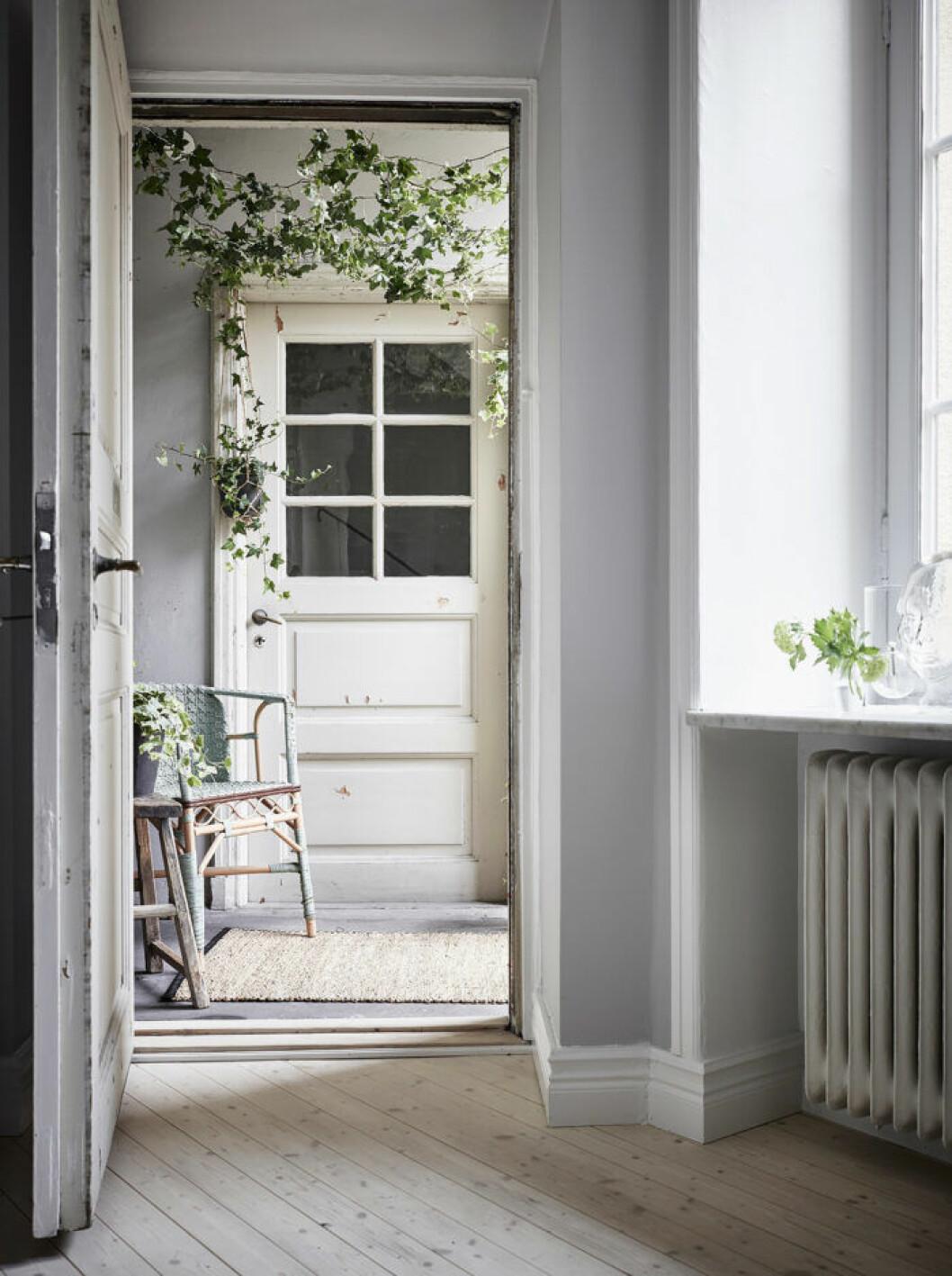 Skapa känslan av en hemlig trädgård med smart placering av klätterväxter