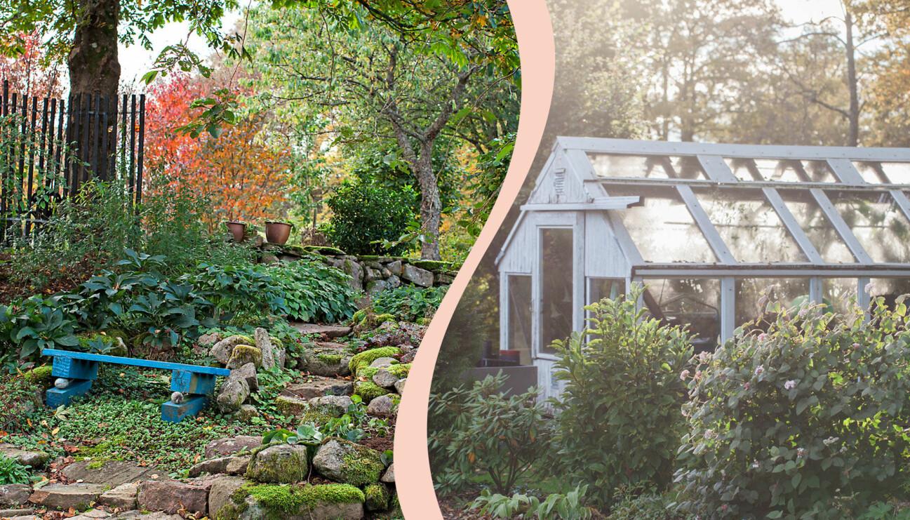 Delad bild. Till vänster: En blå bänk och vacker naturträdgård på Eksäter. Till höger: Ett vackert växthus i trä och glas.
