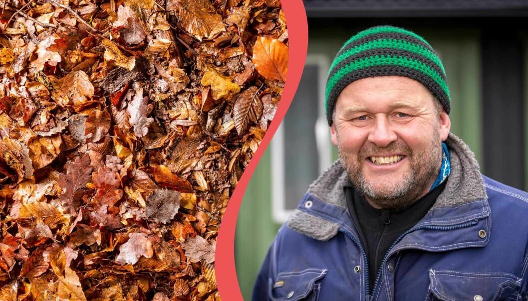 Delad bild. Till vänster: Komposterade löv. Till höger: John Taylor