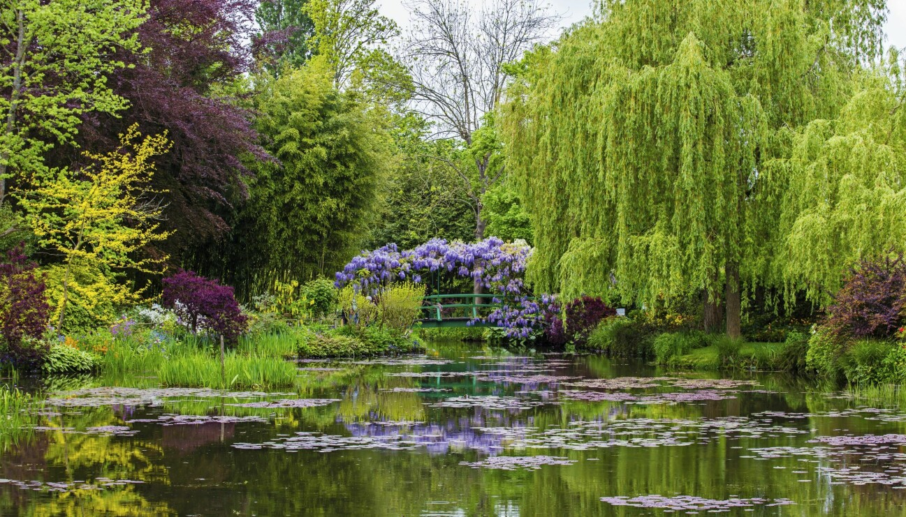 John Taylor saknar Monets trädgård i Giverny.