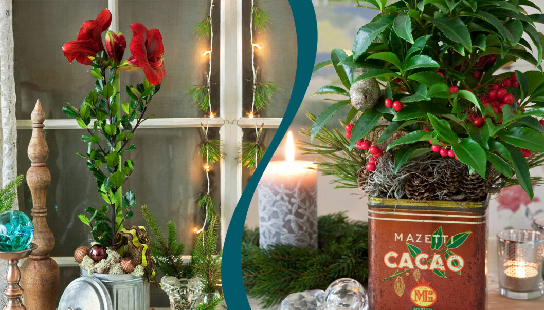 Jularrangemang med blommor planterade i burkar.