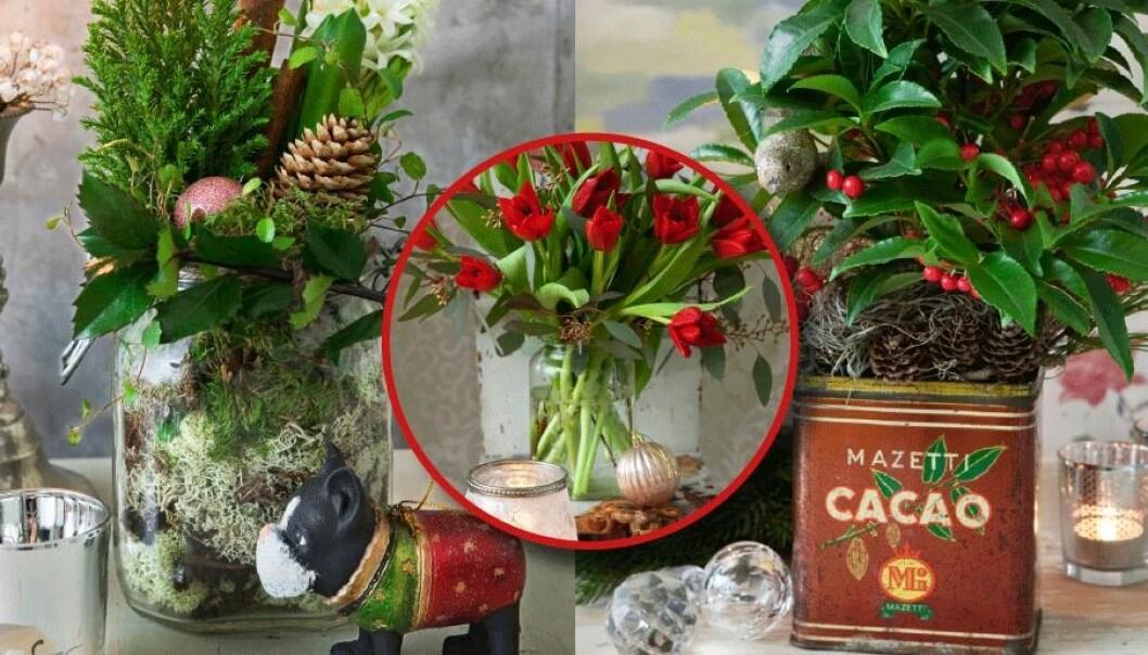 Testa att plantera julens blommor i burkar istället för krukor!
