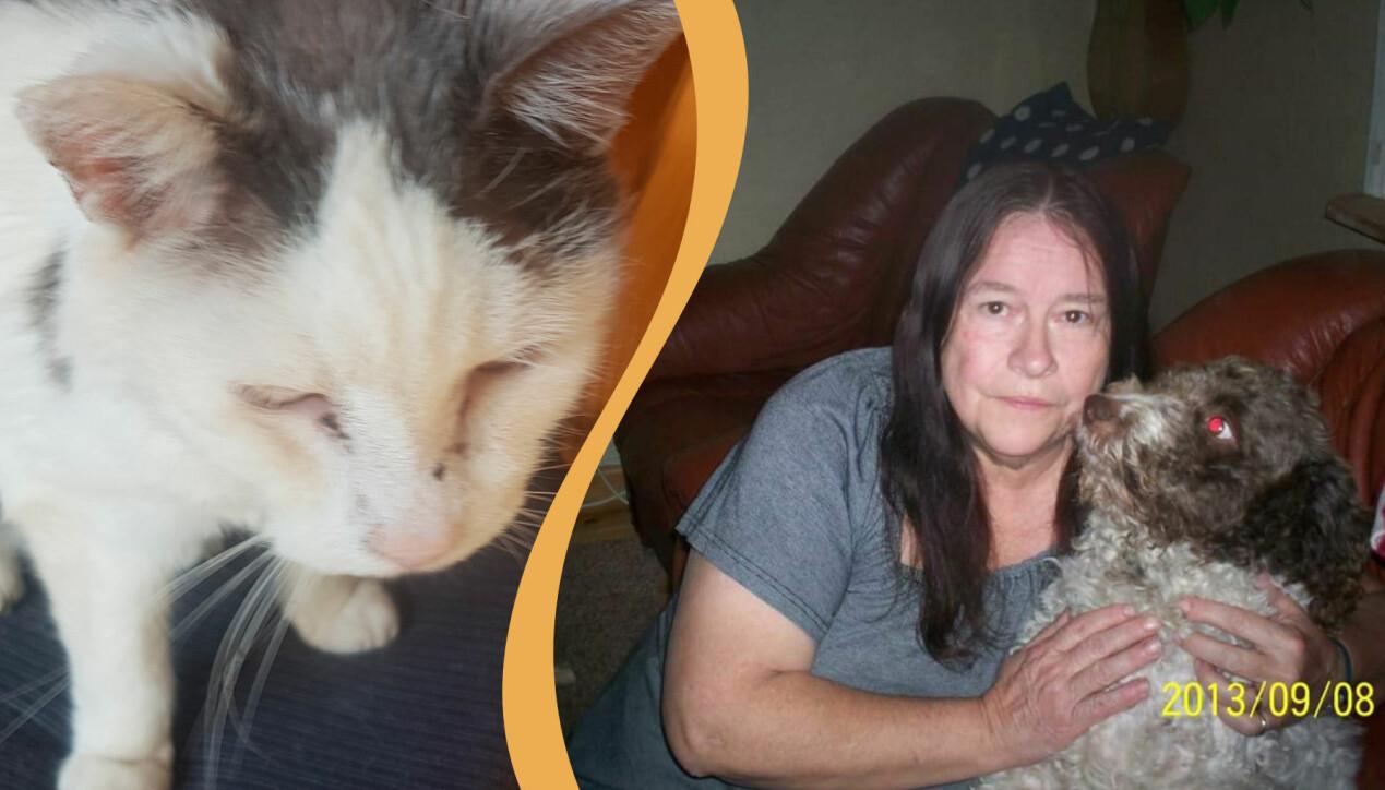 Katten Oskar har vit och grå i päls och både hör och ser sämre nu när han är så gammal som 25 år. Ingalill Johnson håller om gatuhunden Simbo.
