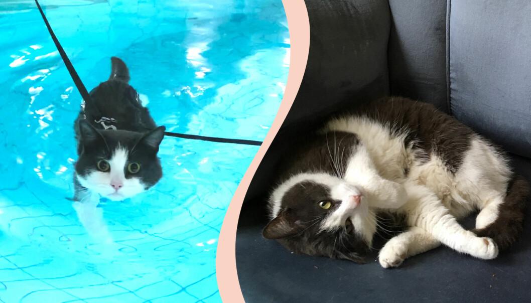 Katten Bonus slår rekord i bassängen och simmar nära 25 minuter.