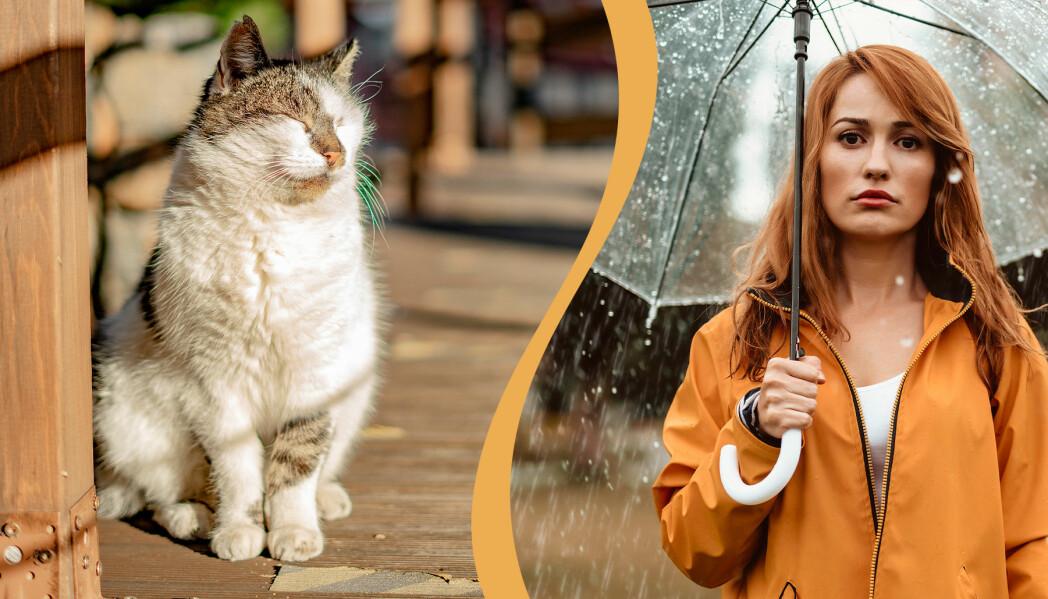 En katt sitter och blundar mot solen utomhus. En kvinna med genomskinligt paraply ser ledsen ut i regnoväder.