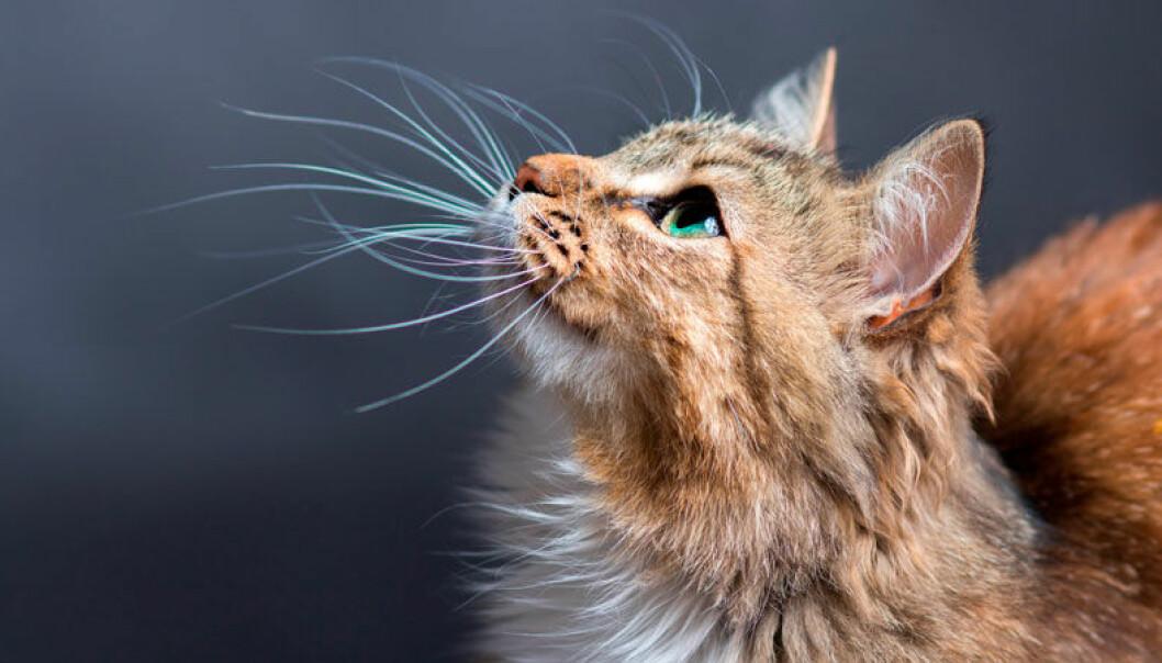 Katt tittar uppåt.