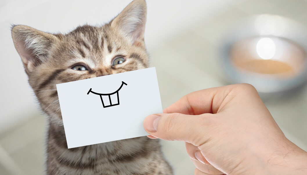 Olika katter har olika personlighetstyper. Den här ser glad ut.
