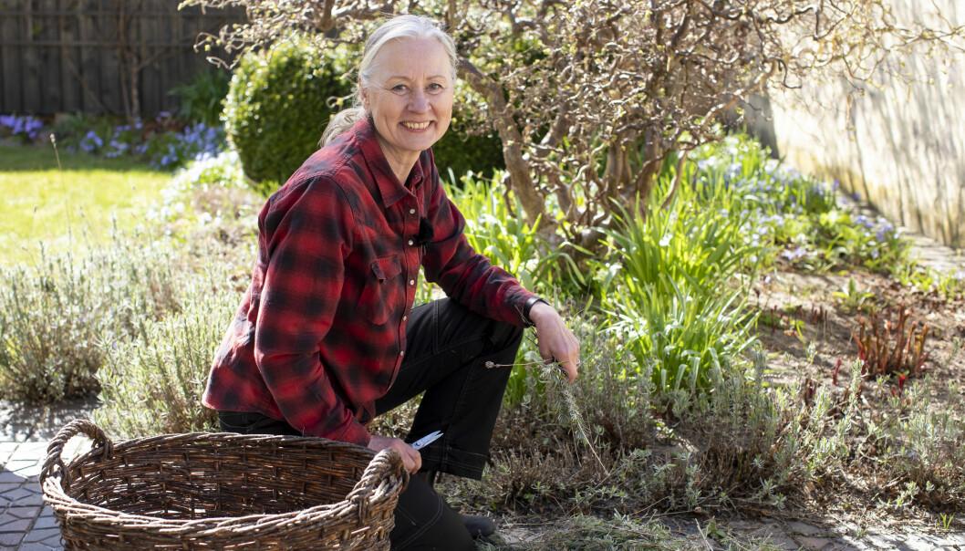 Anni Jähde visar hur du klipper din lavendel för blomning och förökar den med sticklingar.SSS