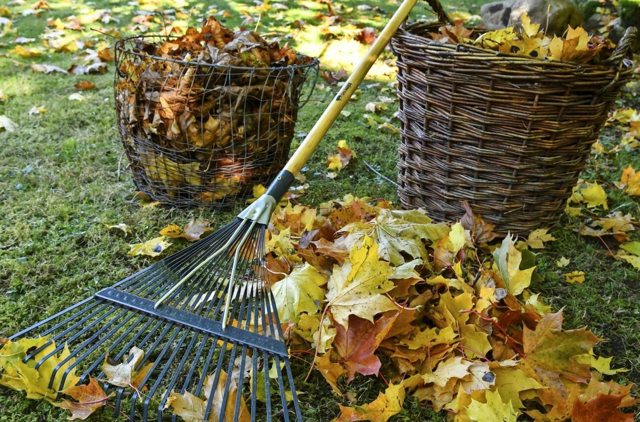 Kratta upp löv om de ligger i stora mängder, till exempel på gräs-mattan. Använd löven till att skydda växter och att täcka bar jord.