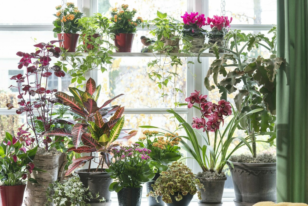 Med en bas blir det både lätt och roligt att komplettera med blommande växter och få ett färgstarkt fönster som ger energi. Basen kan vara både gröna växter och växter som har färg i sig själv, även om de inte blommar.