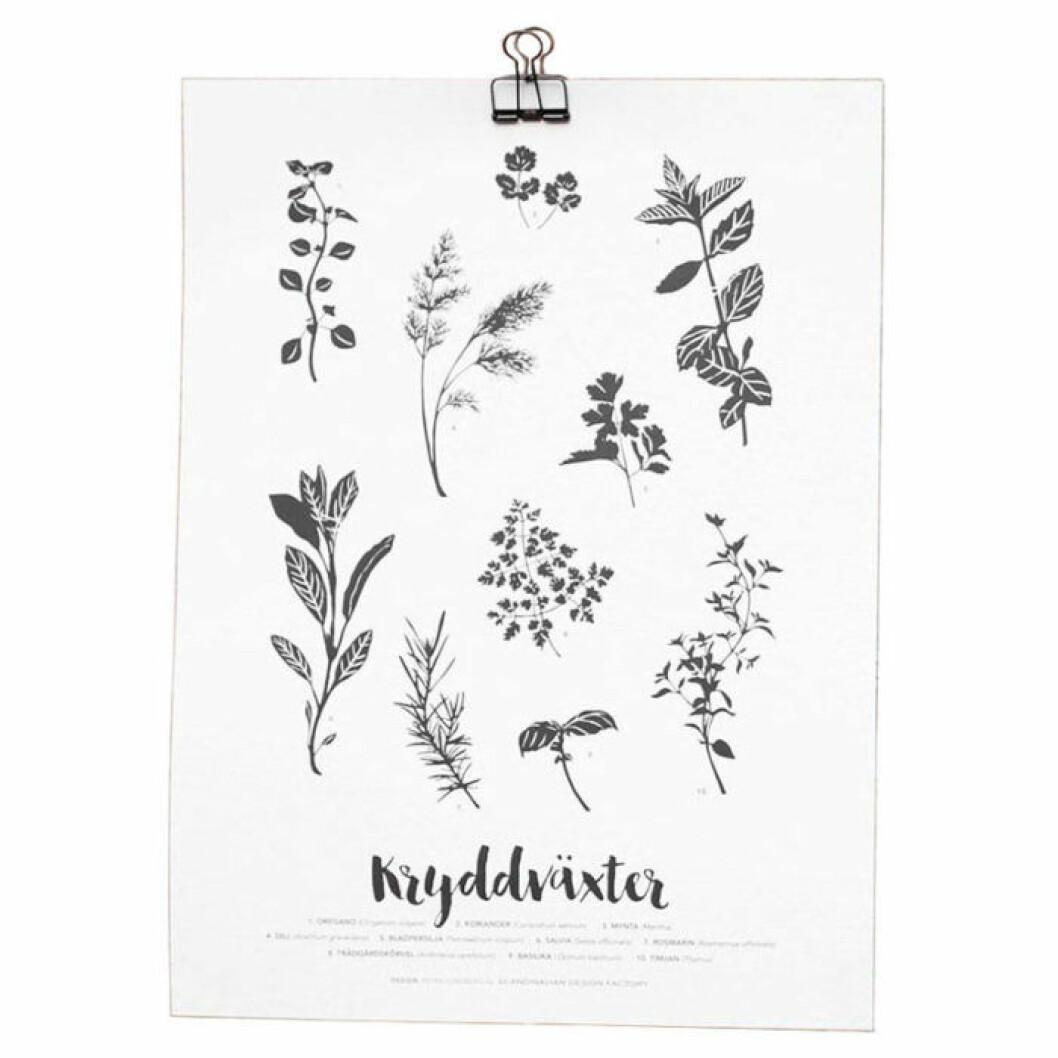 Poster med kryddväxter från Scandinavian Design Factory.