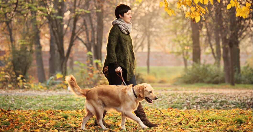 Kvinna med hund på promenad