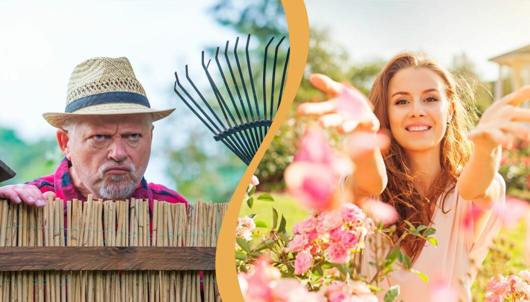 Delad bild. Till vänster: En man ser irriterad ut och tittar över staketet. Till höger: En kvinna kastar rosblad i trädgården.