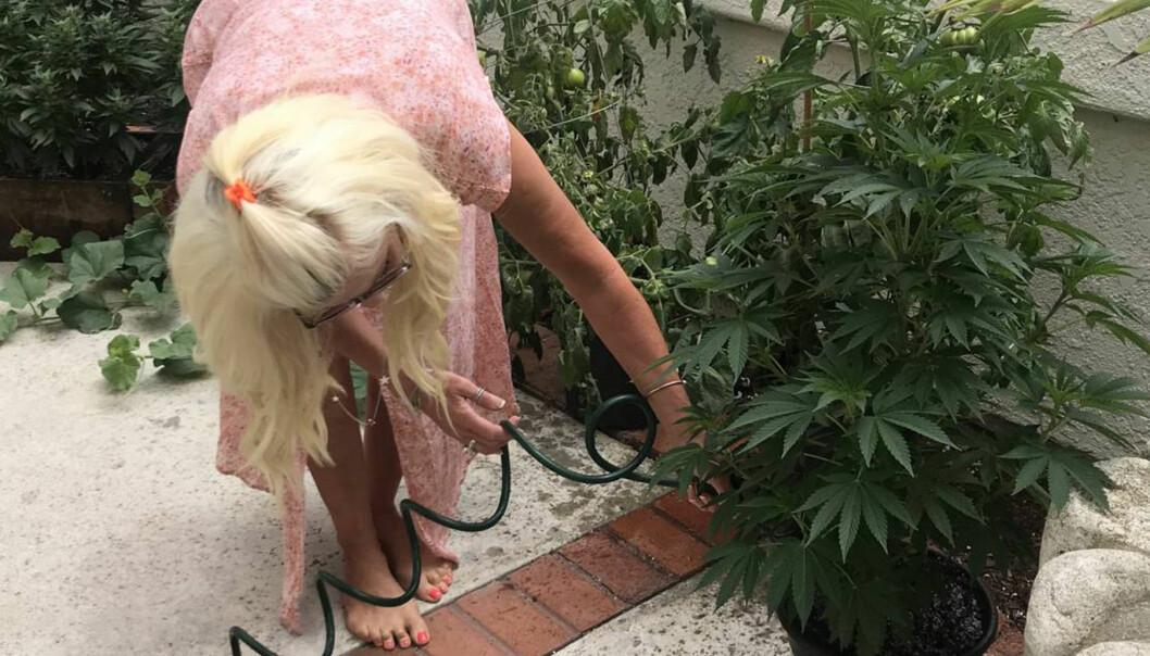 Maria Montazami vattnar en marijuanaplanta hos dottern Hanna