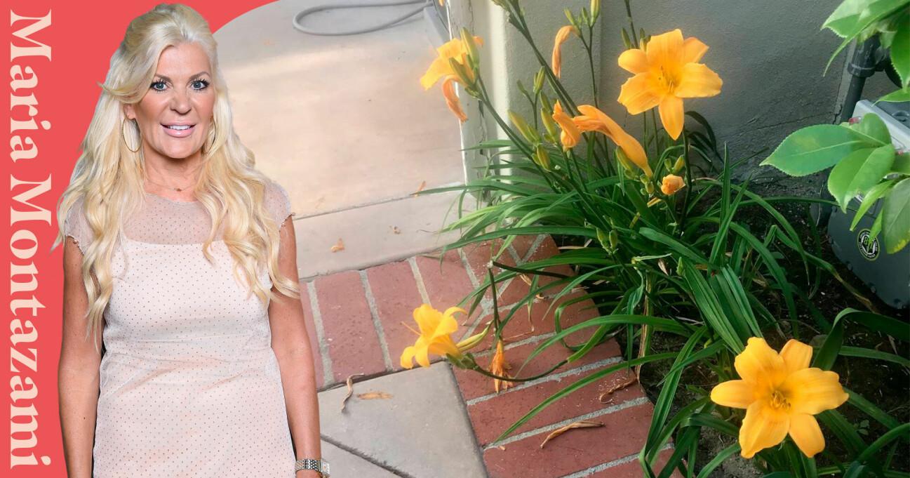 Maria Montazamis blommor har blivit förstörda efter att maken Kamran kört över dem med soptunnan.