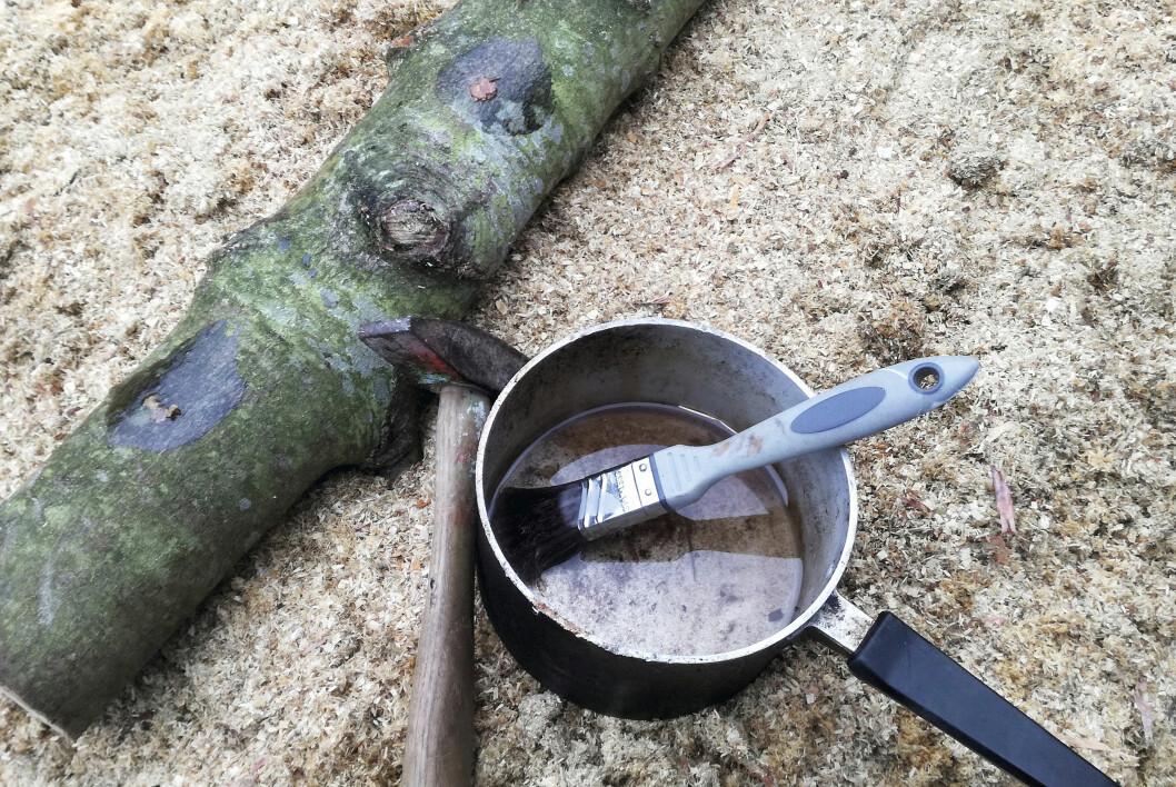 När mycelpluggarna är på plats förseglar man öppningen med varmt vax som penslas över så att bakterier och luftburna sporer inte kan ställa till problem. Bivax fungerar bra