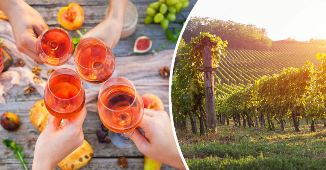 Vin och vingård