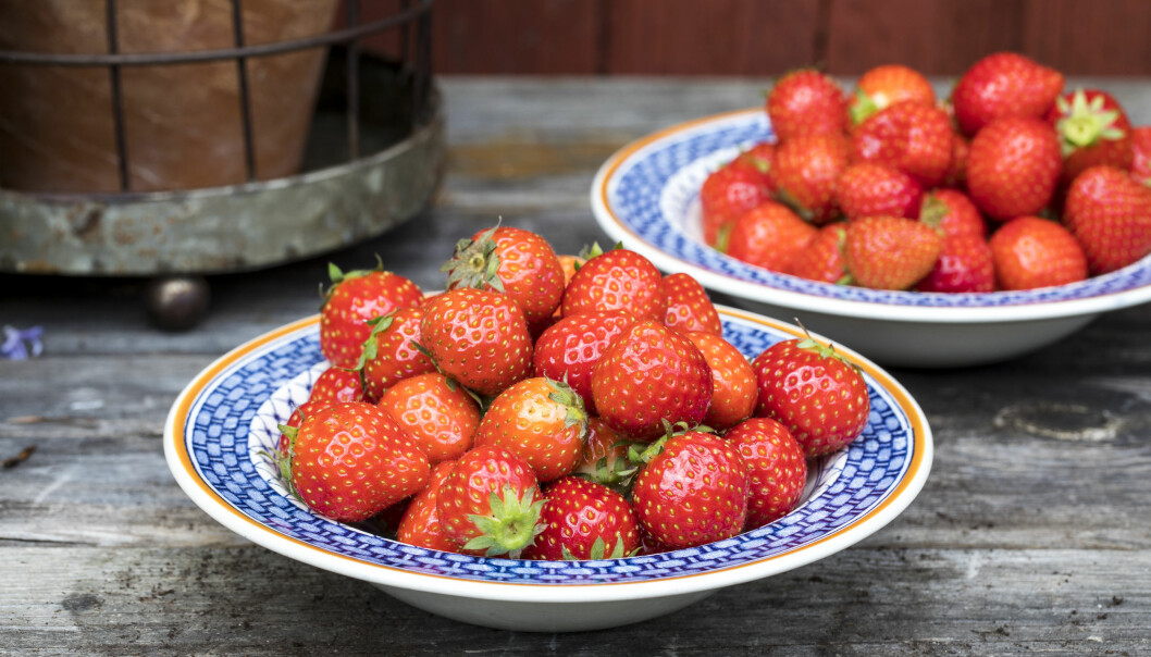 Odla dina egna jordgubbar
