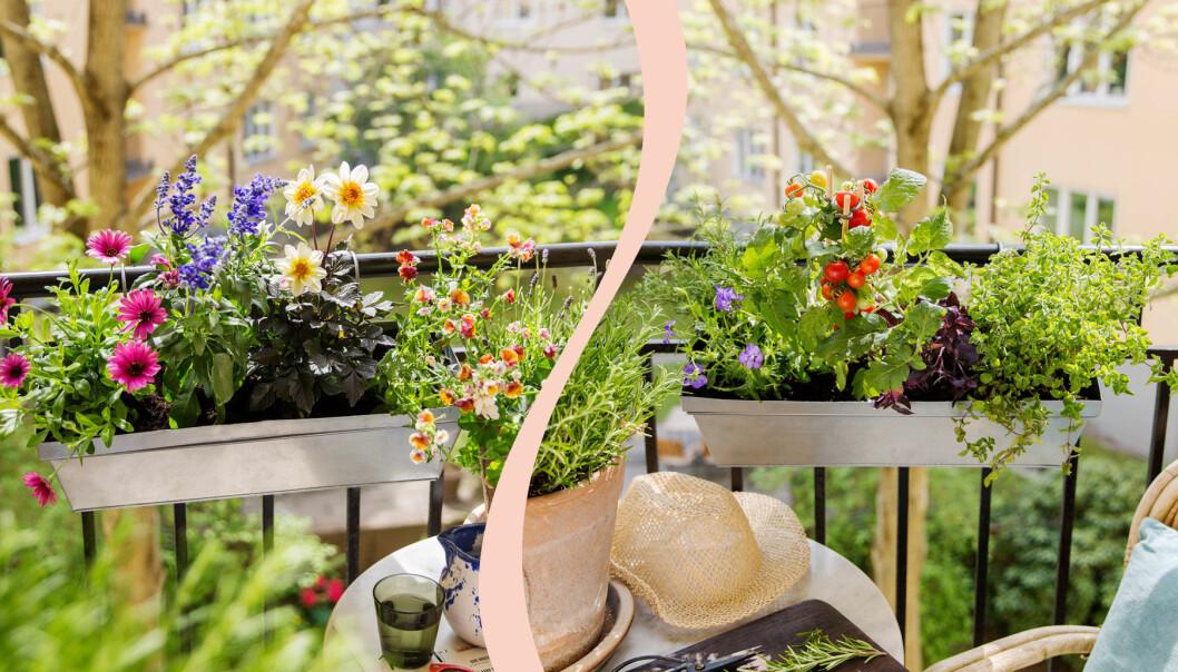 Delad bild på två olika balkonglådor. Till vänster: En balkonglåda som lockar till sig pollinatörer. Till höger: En odlingslåda för hemmakocken som vill odla ätbart på balkongen.