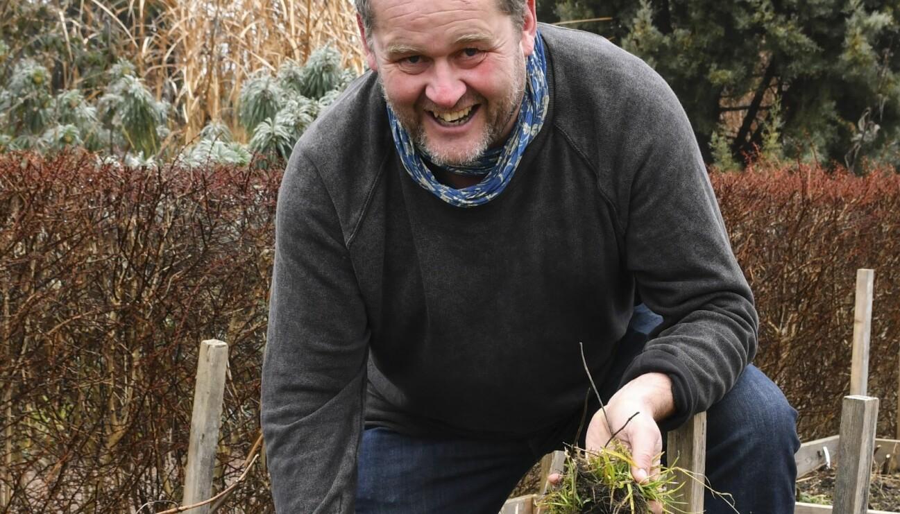 John Taylor drar upp ogräs ur marken.