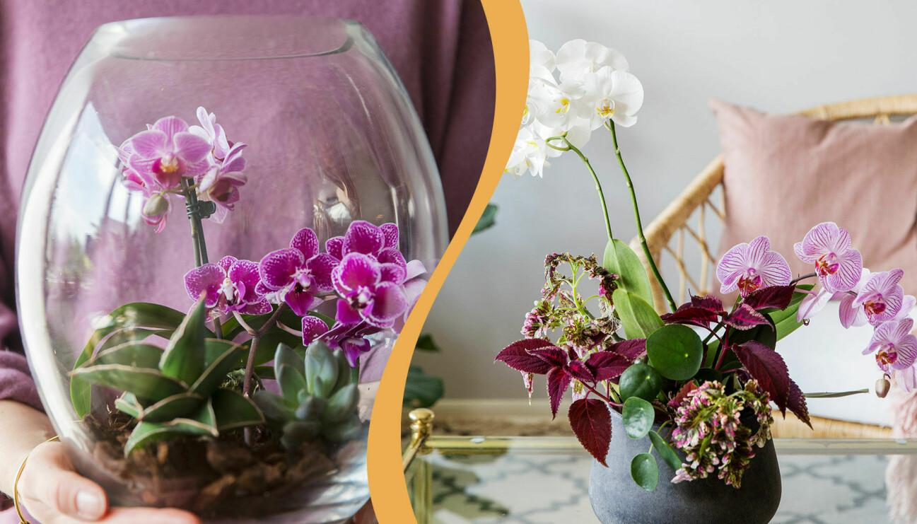 Två olika vackra planteringar med orkidéer.