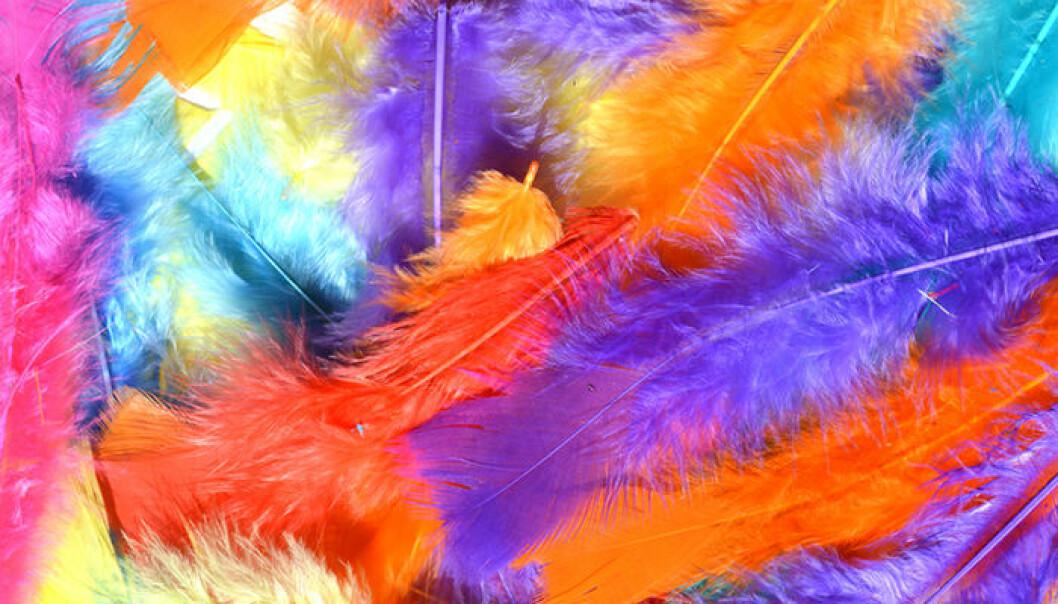 Påskfjädrar i flera olika färger.