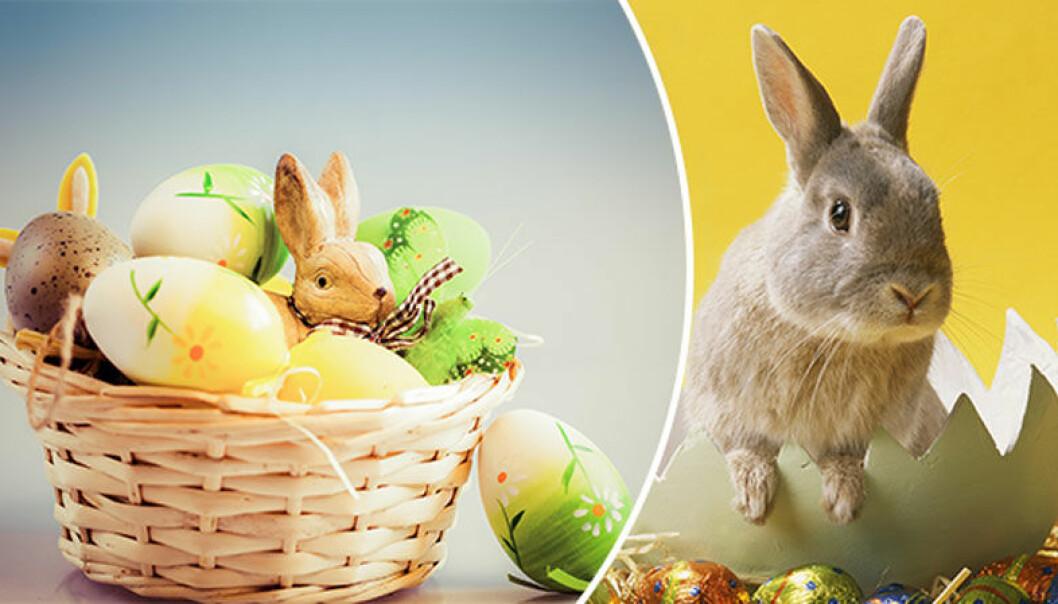 Vem är påskharen och var kommer traditionen ifrån?