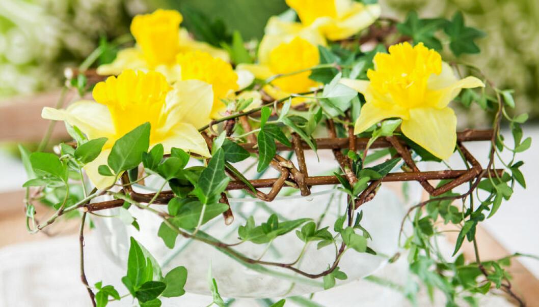 Dekorera påskbuffén med ett vackert arrangemang av påskliljor.