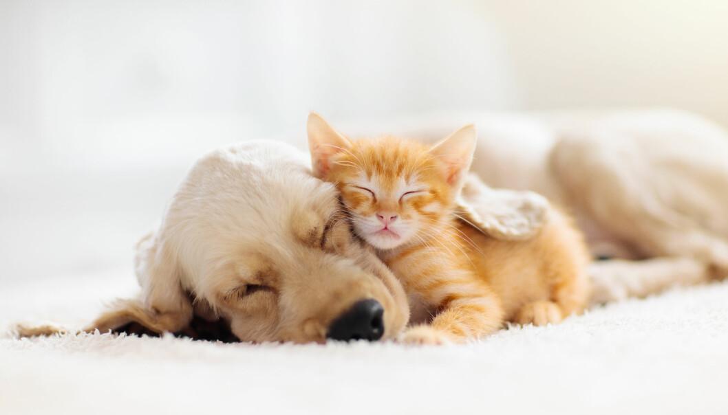 Hund och katt sover tillsammans.