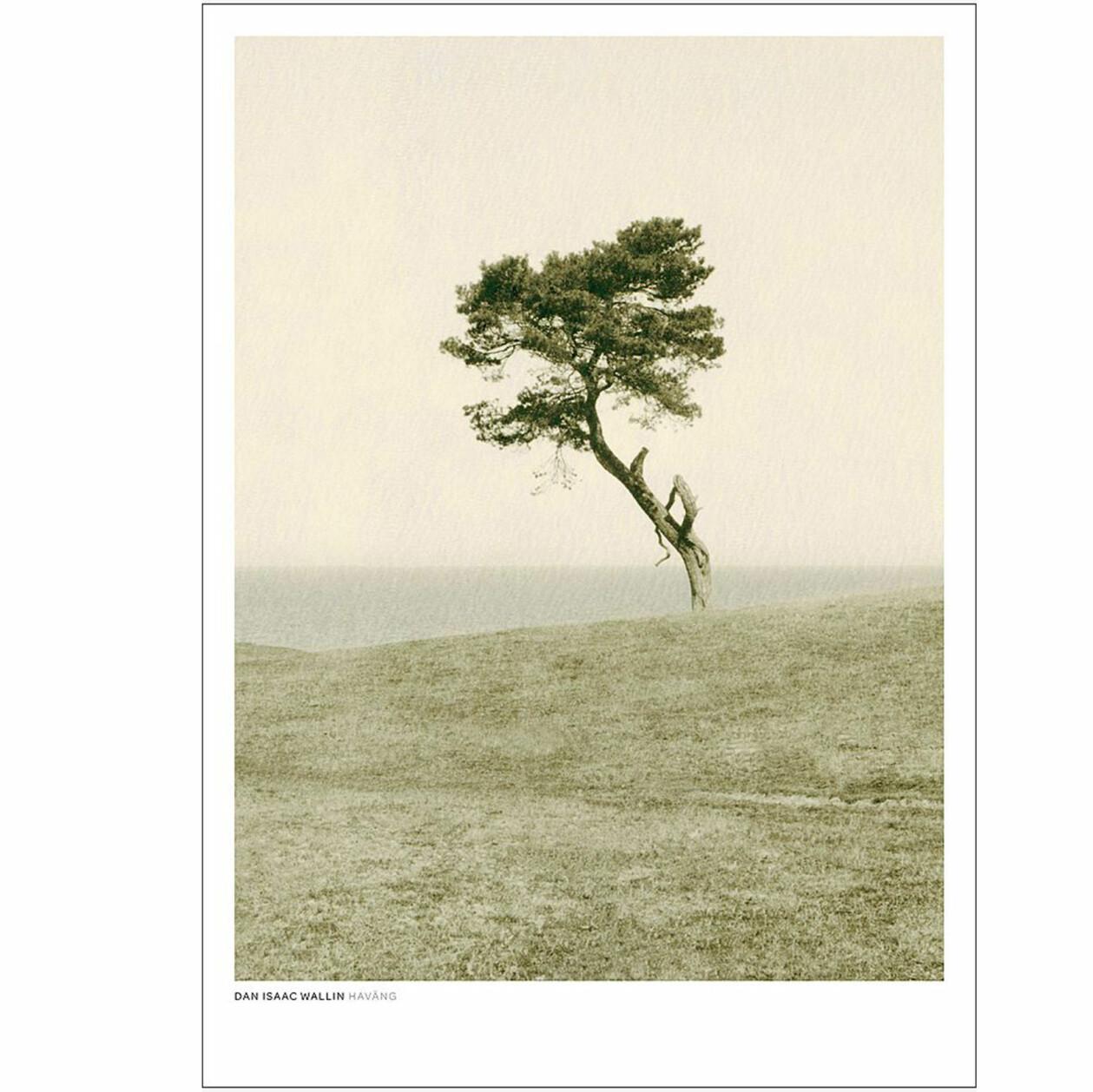 Poster med träd, av Dan Isaac Wallin