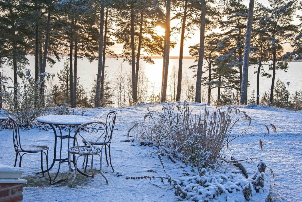 Prydnadsgräs ger liv åt rabatten på vintern.